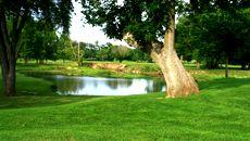 Golf Course Fertilizers and Soil Amendments