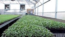 Greenhouse Growers Organic Fertilizers